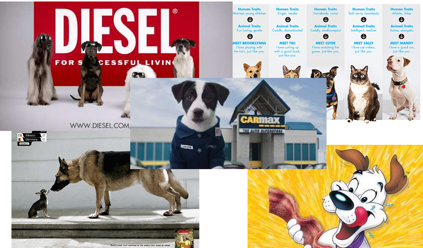 Dogs dominate advertising for everything from cars to eyewear because people trust dogs more than most spokespersons.