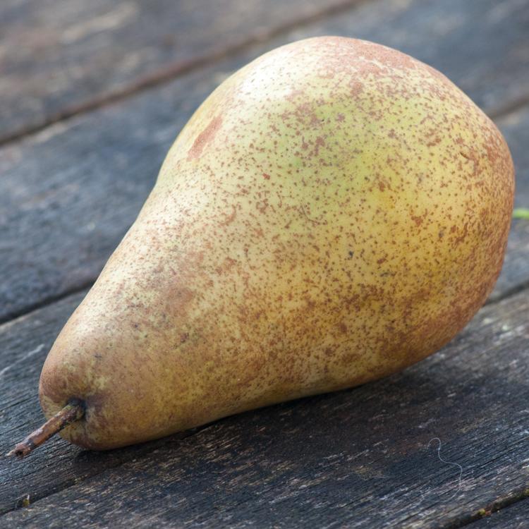Pear photographed by Katie Vandyck.jpg