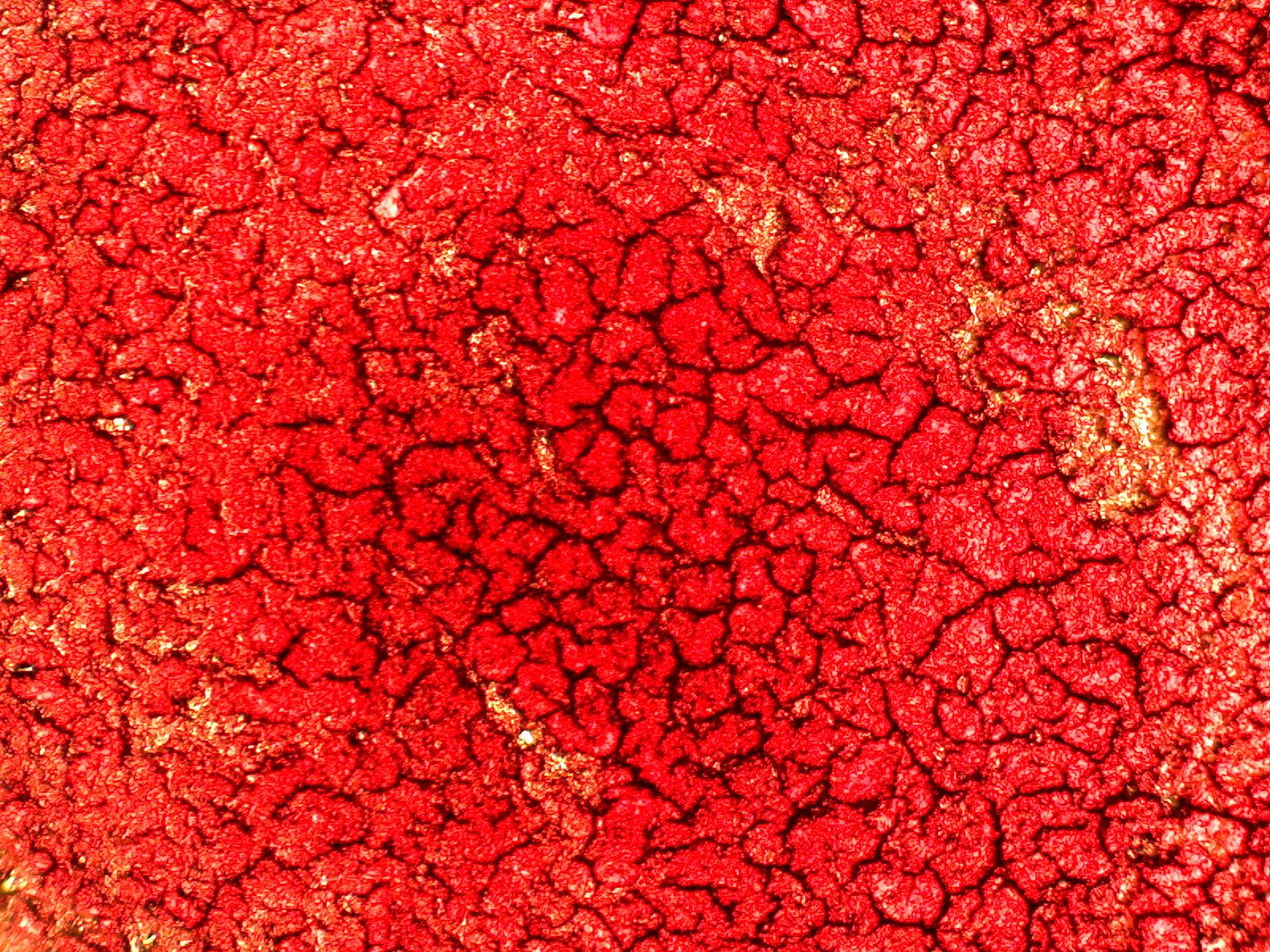dry layer fibrin.jpg