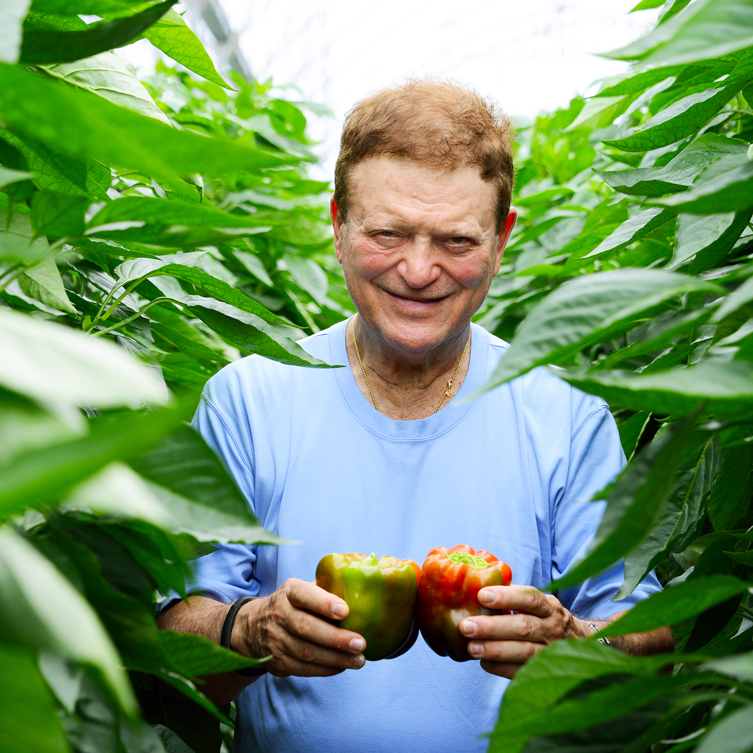 CEO Chuck Weisinger in our Dominican Republic Pepper greenhouse
