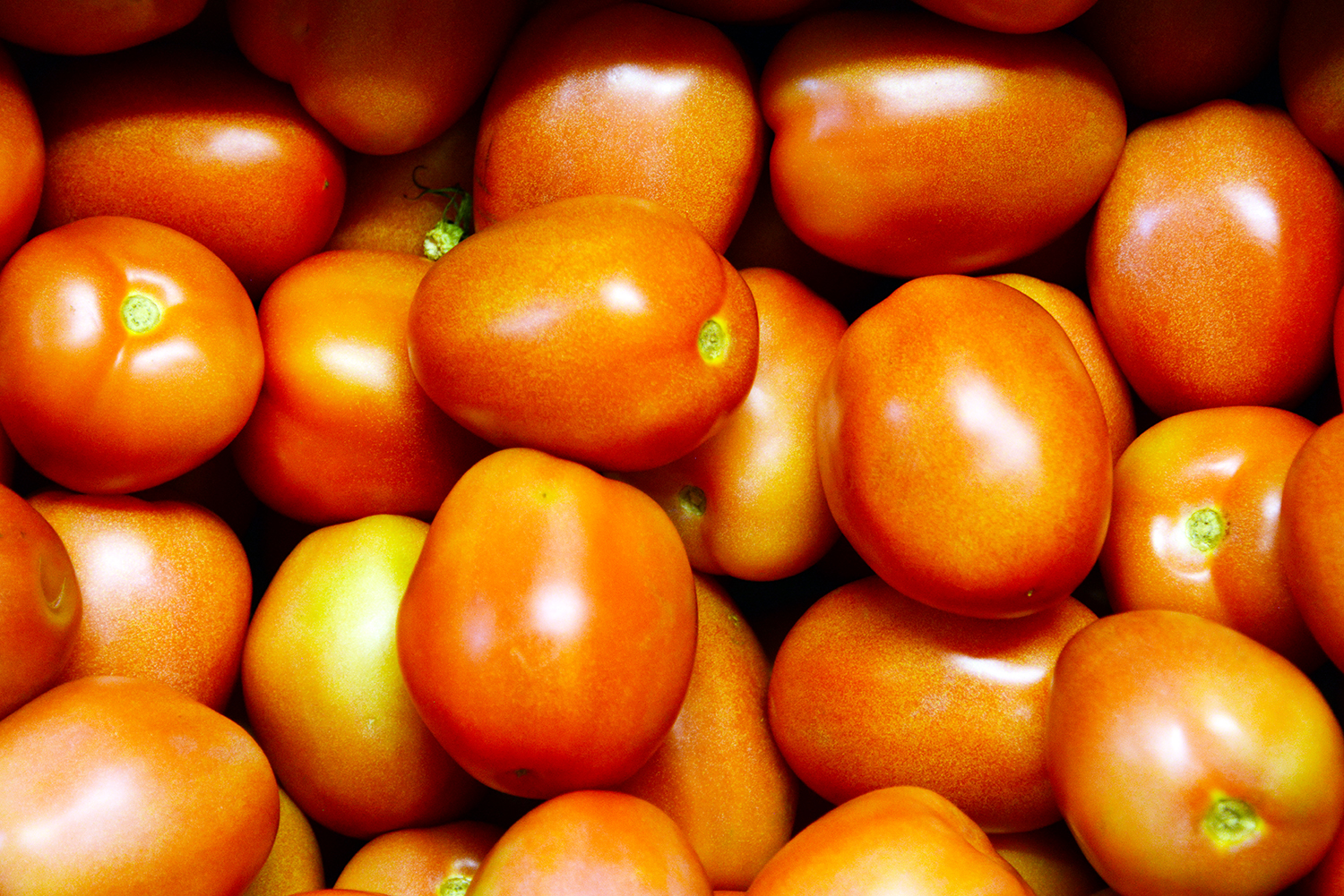 Mexico tomatoes in our Nogales, Arizona warehouse.