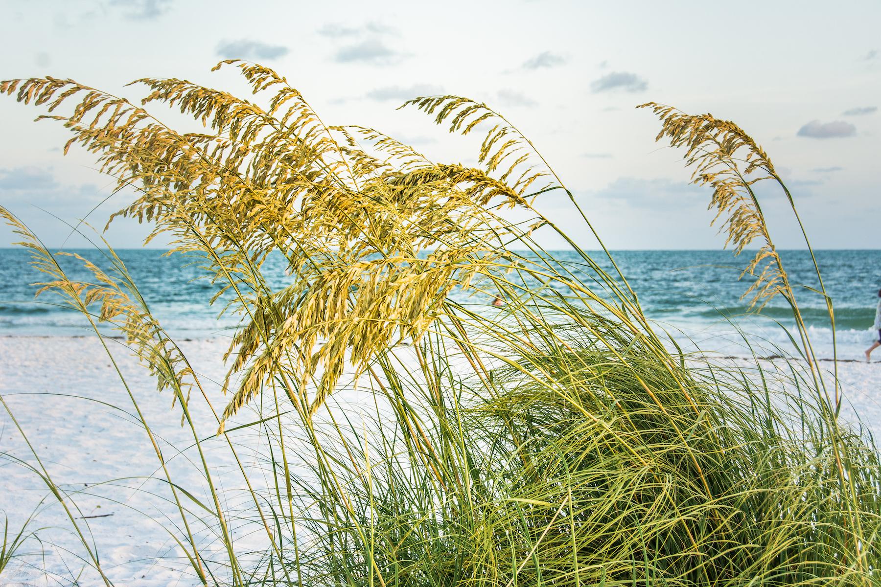 Gentle Breeze - Leslie Brown