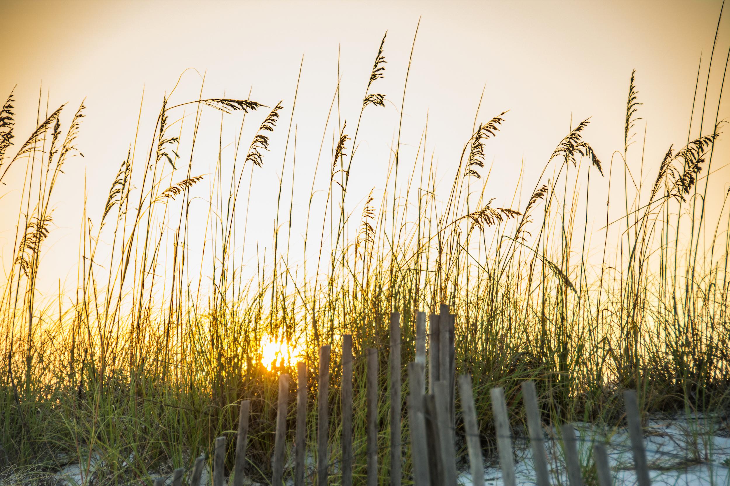 Summer Oats - Leslie Brown