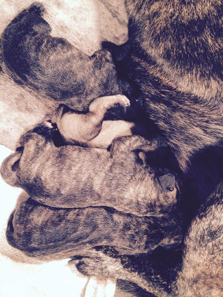 This is a photo of our last litter. We have no current puppies or litters planned. Stay in touch for updates!