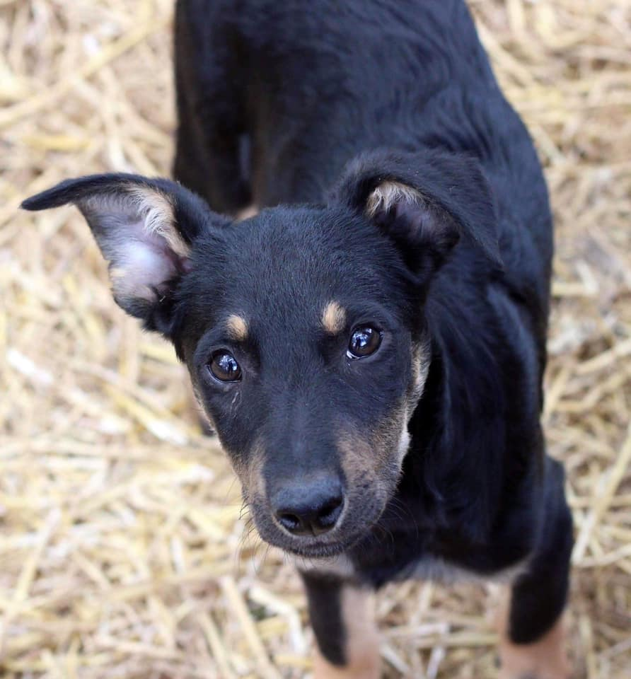 One of the several animals looking for their Furever homes on Saturday!