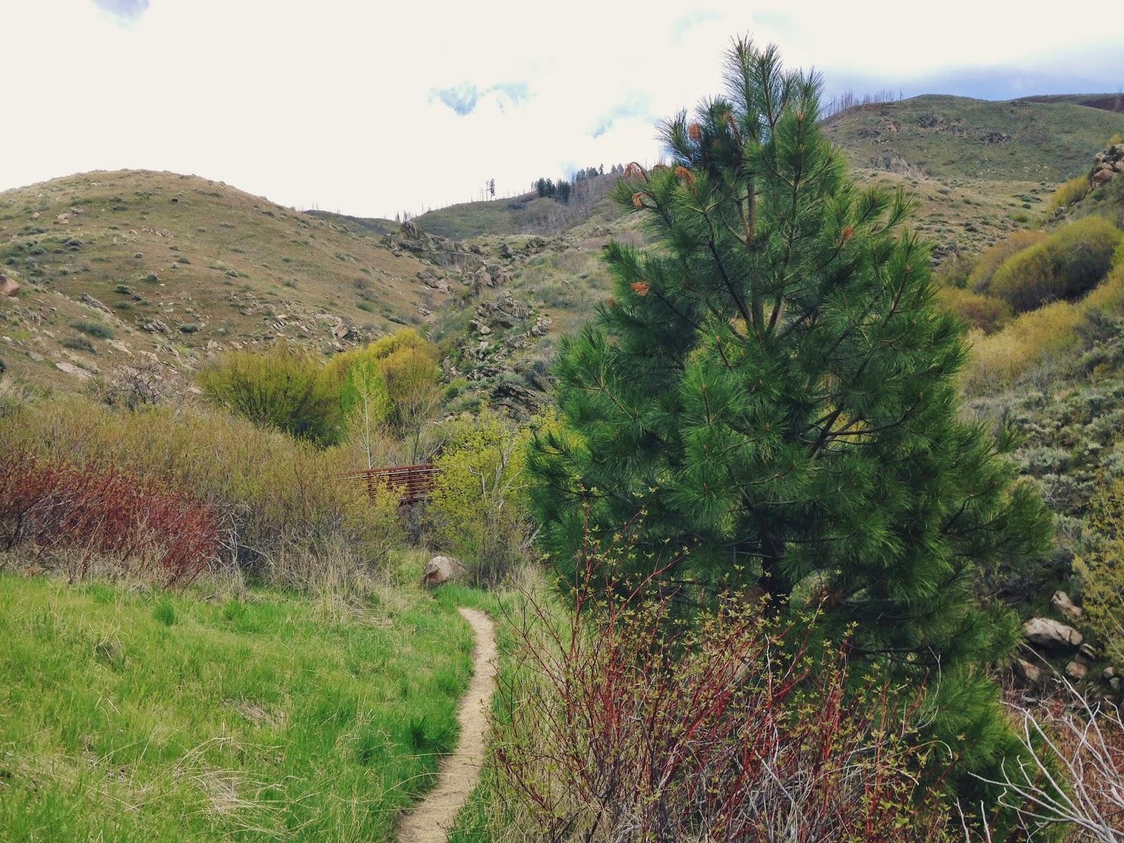 my+pine+tree.jpeg