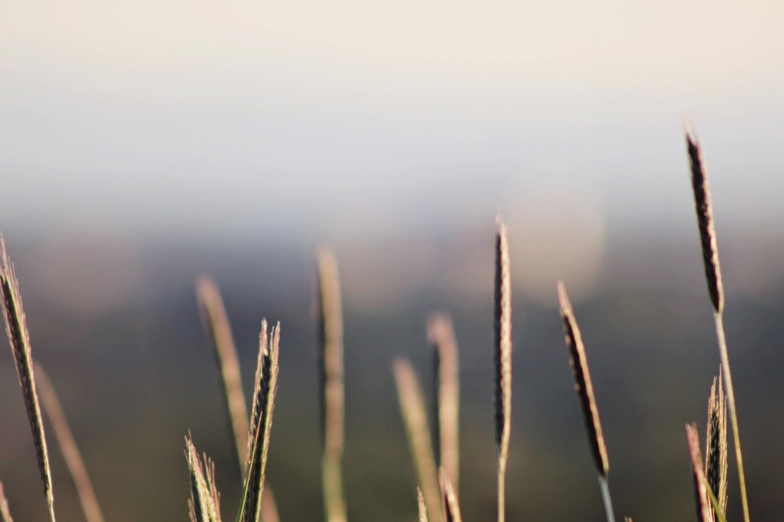 tall+spring+grass.png