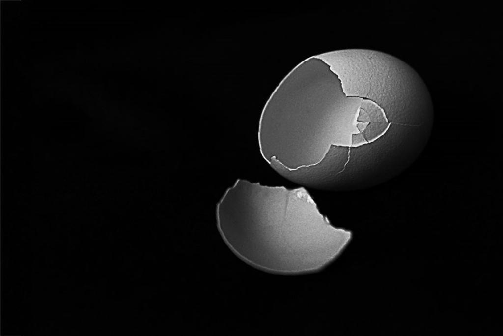 Berns Simple Shell 72.jpg