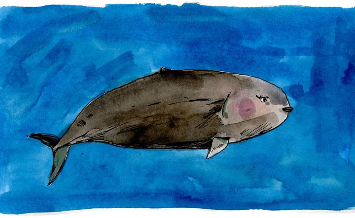 whale5-small.jpg