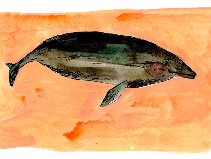 whale4-small.jpg