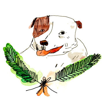 holiday pet portrait