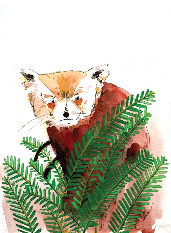 rusty the red panda - Elizabeth Graeber