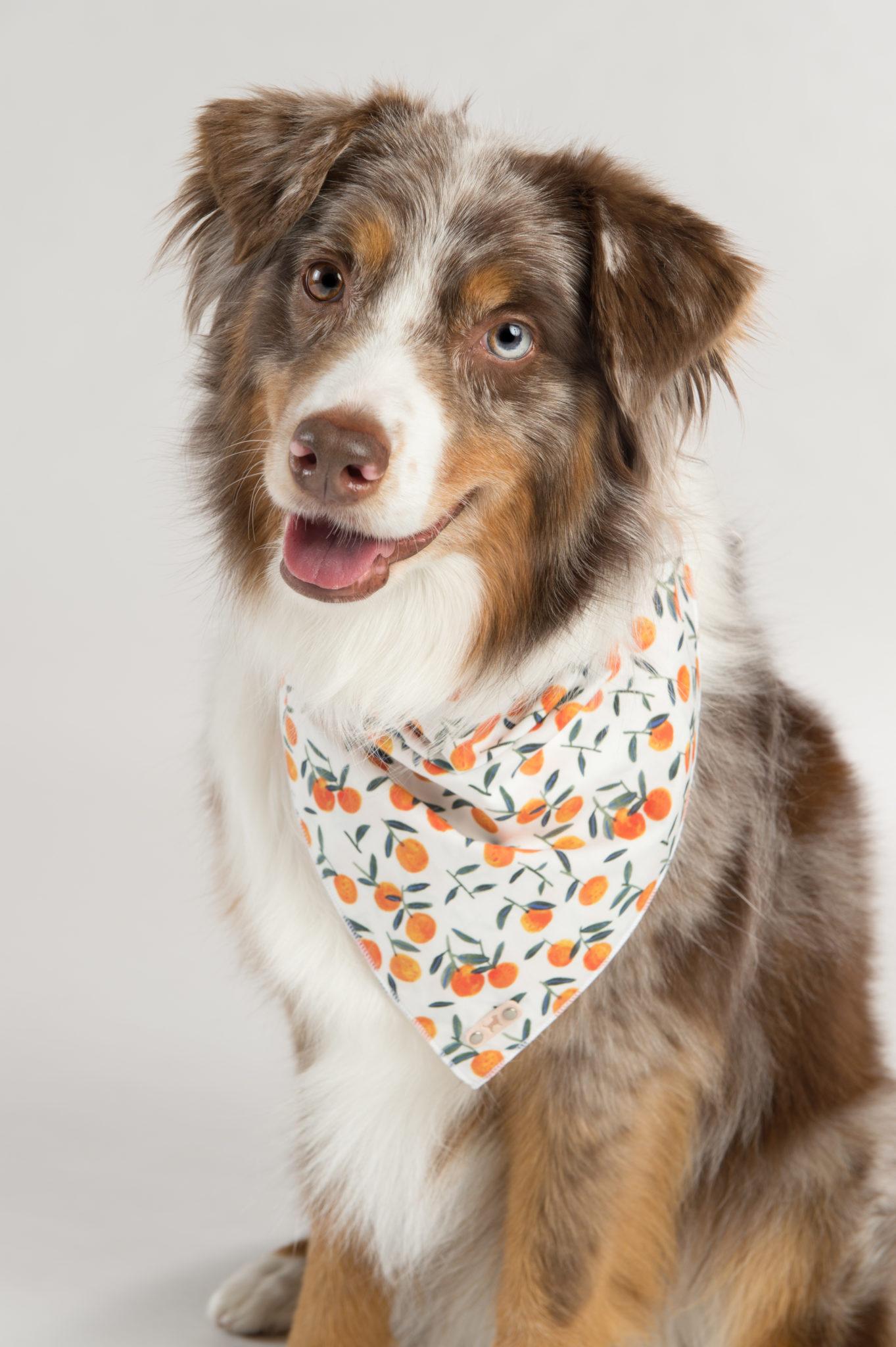 dog love repeate bandana4.jpg