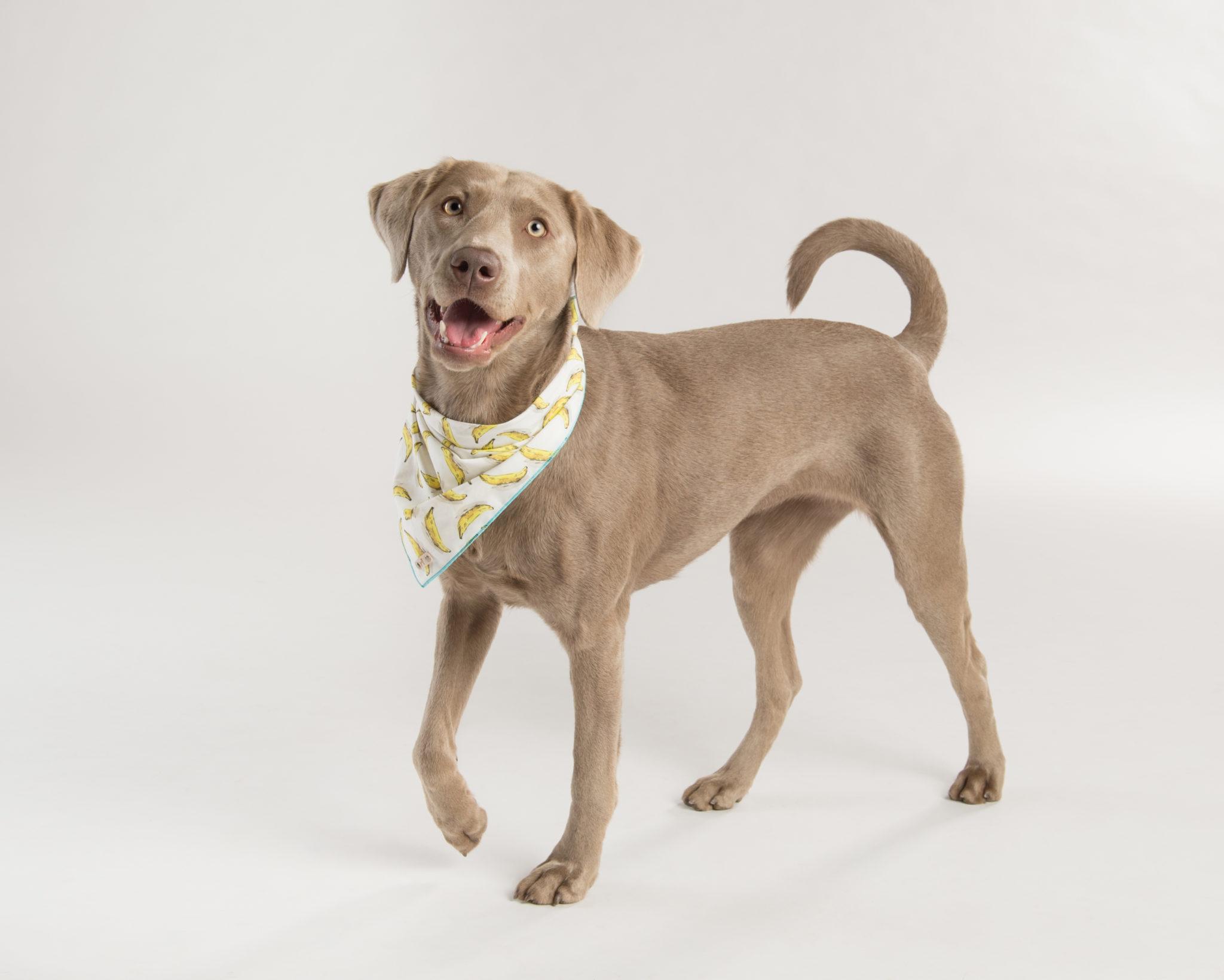 dog love repeate bandana2.jpg