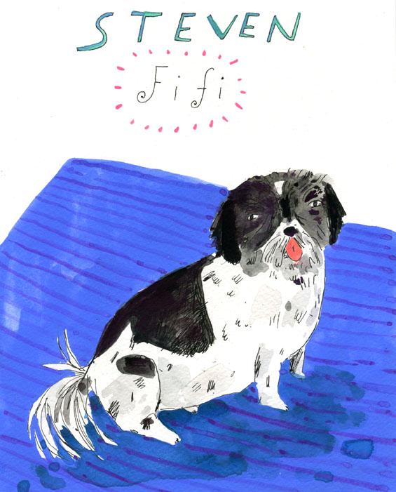 fifi dog portrait