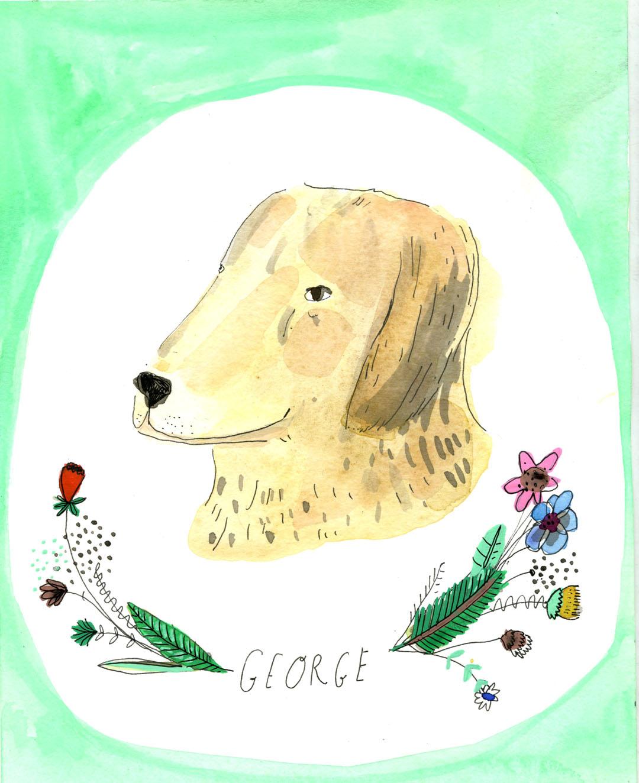 Dog portriat