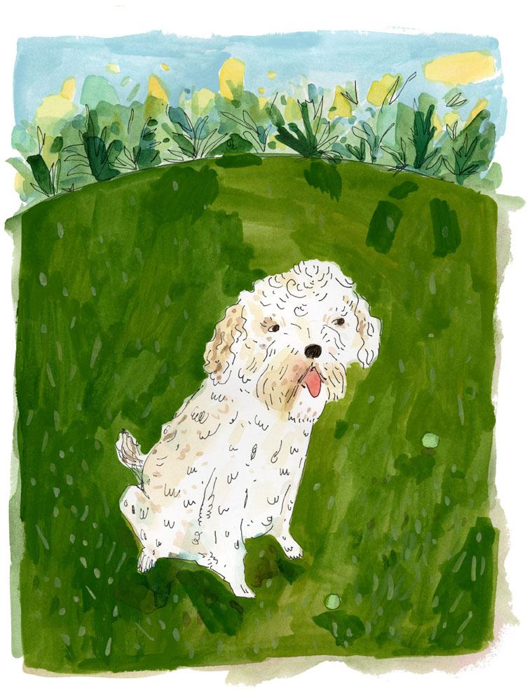 Teddy-dog