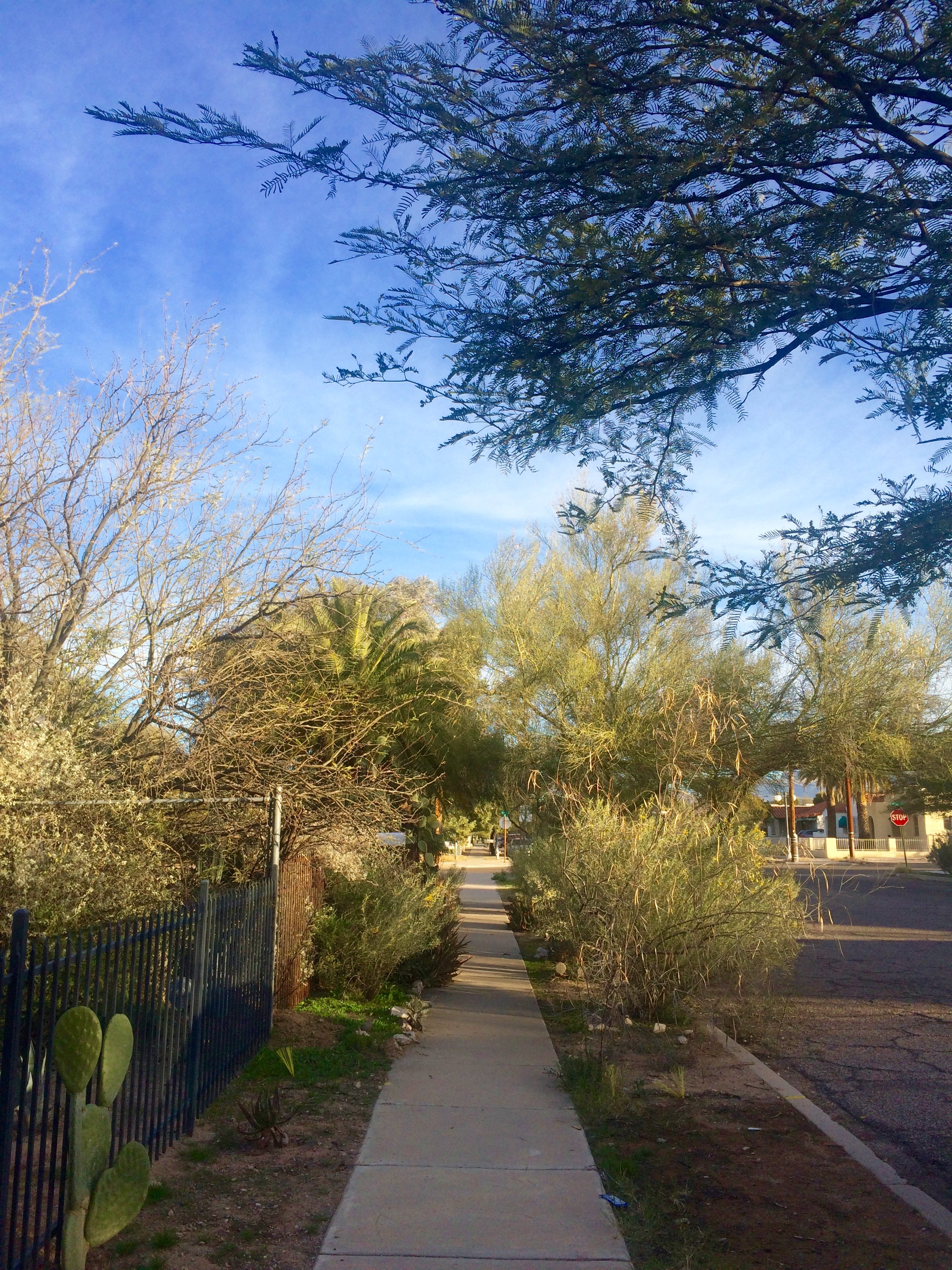An adorable residential street right near downtown Tucson