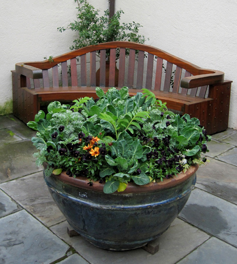A large pot of edibles and flowers in the courtyard.