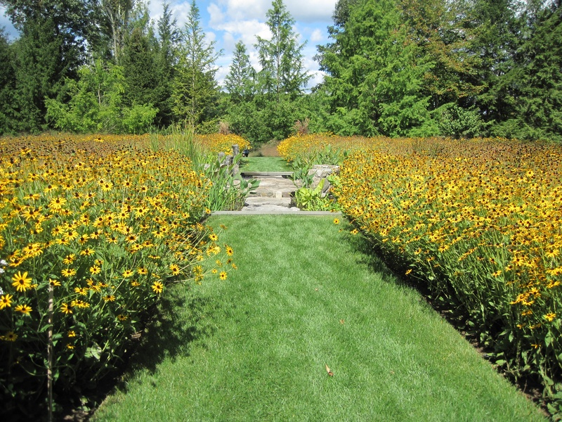 A huge circle of rudbeckia bisected by a decorative pool