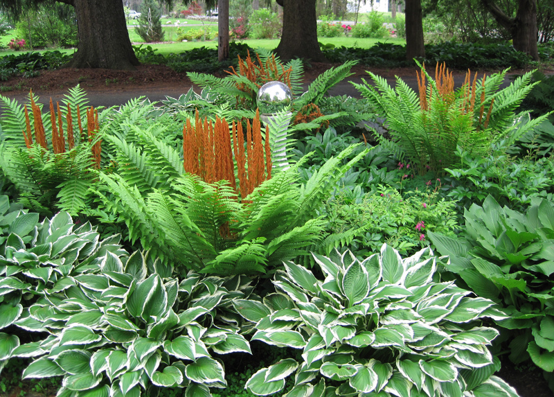 Cinnamon fronds andbleeding hearts steal the show in June