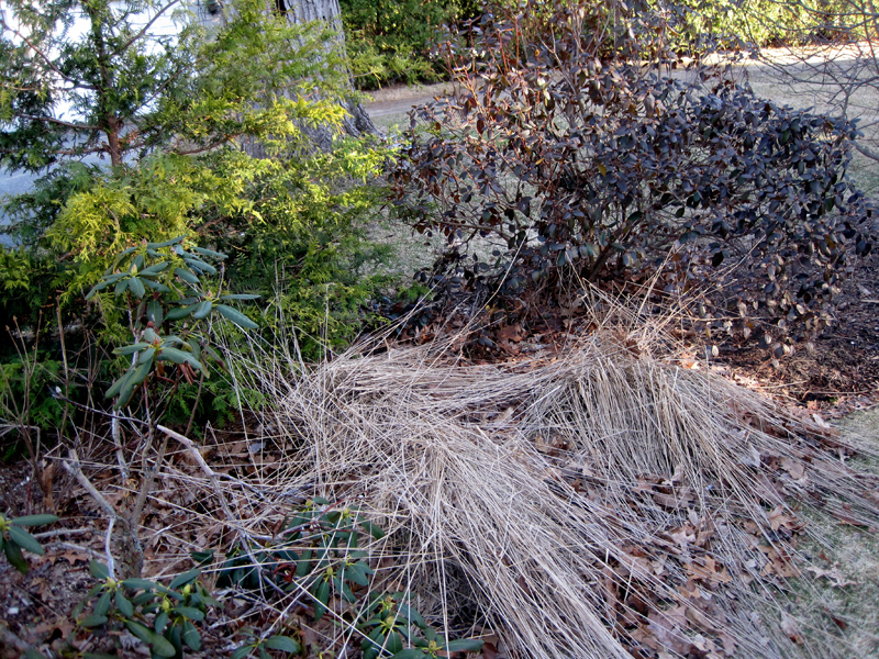 cut down ornamental grasses