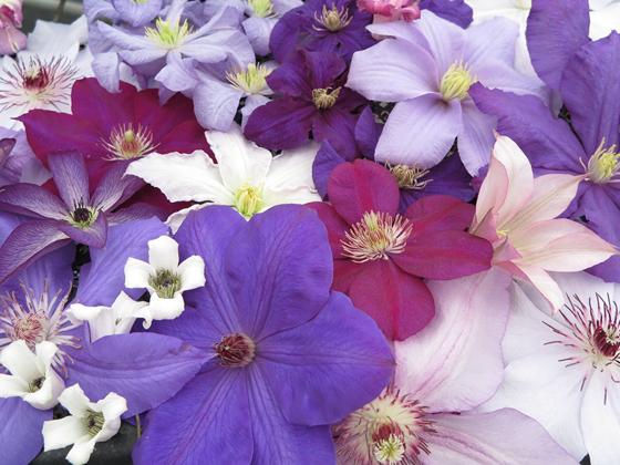 10 Favorite Mail Order Nurseries Enchanted Gardens