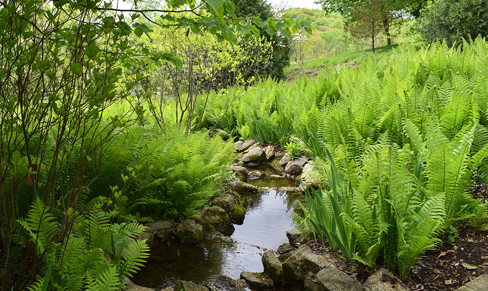 Brook connecting the Upper Water to the circular pond