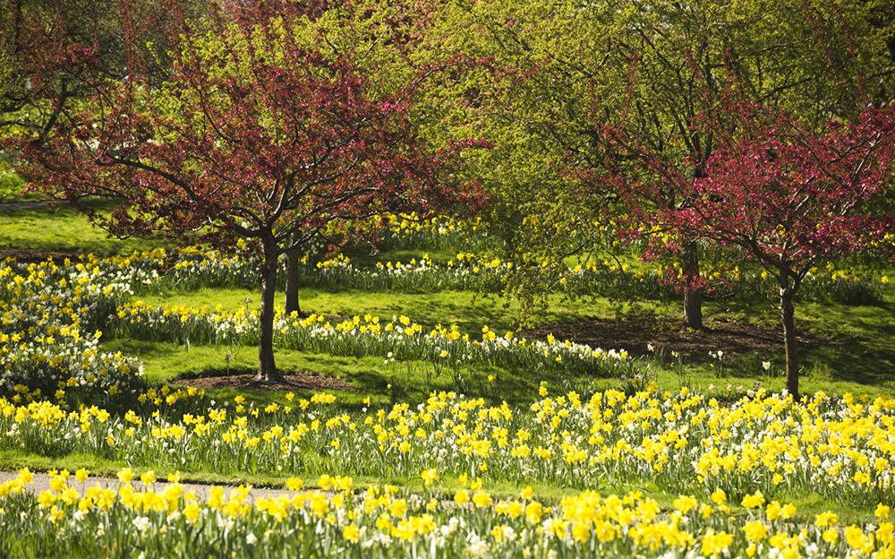 New York Botanic Garden