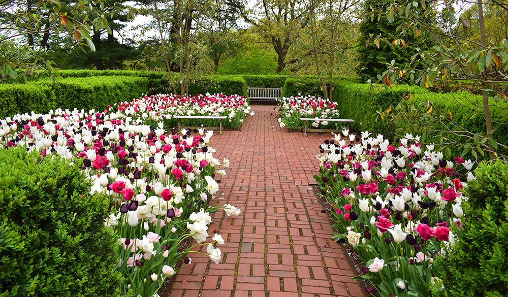 Frelinghuysen Arboretum