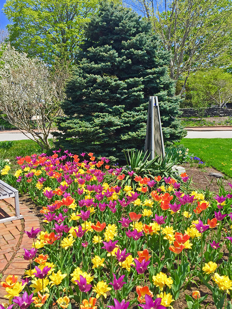Designing With Daylilies