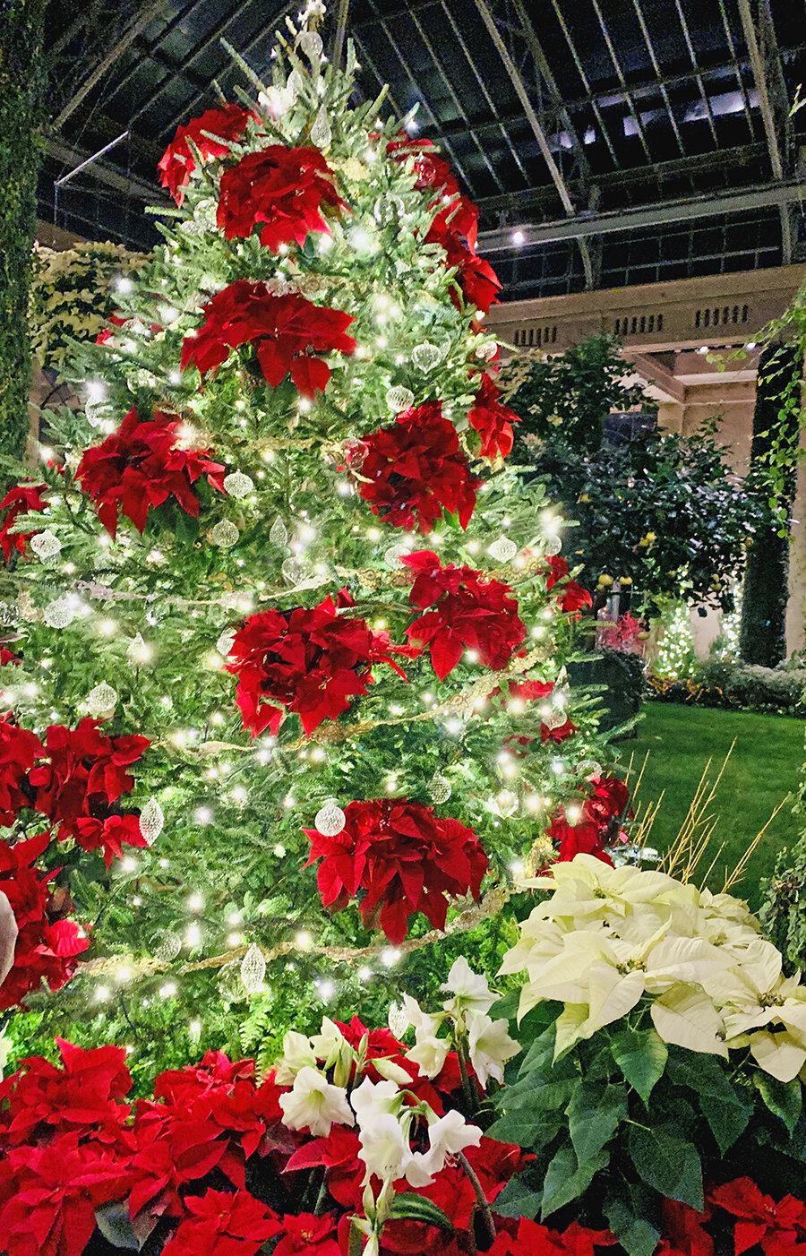 Christmas Longwood Gardens 14.JPG