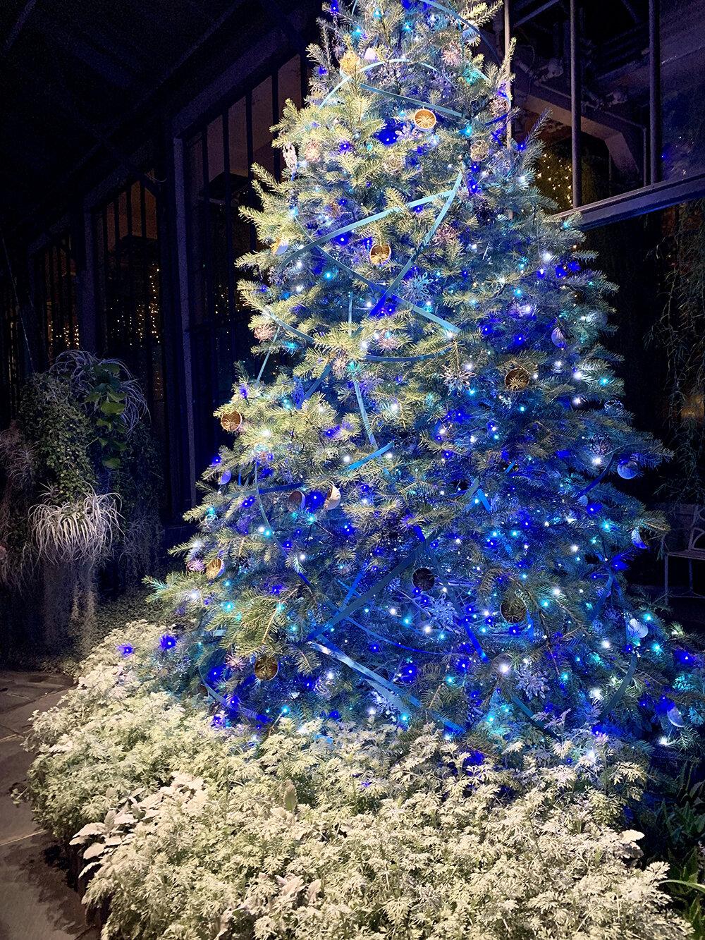 Christmas Longwood Gardens 16.JPG