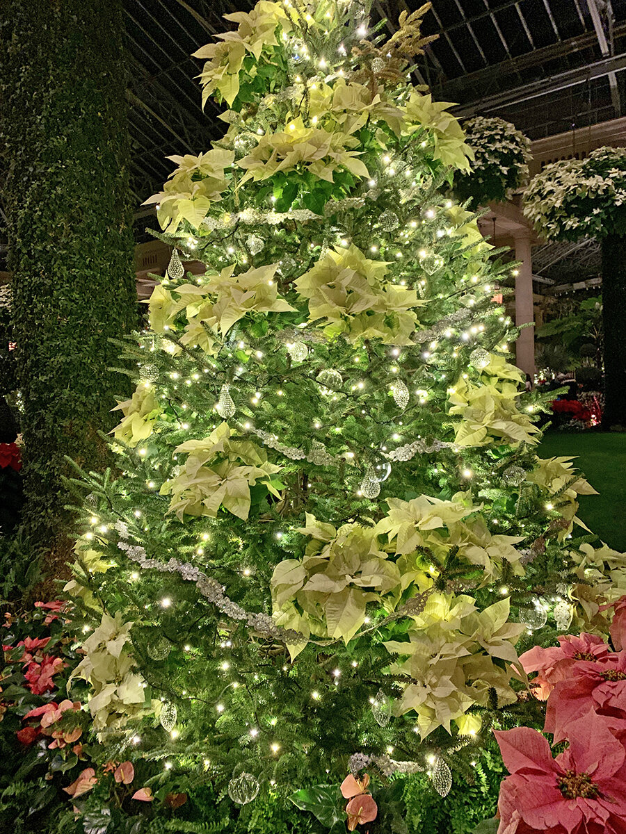 Christmas Longwood Gardens 20.JPG
