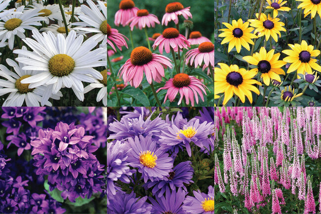 CUTG_0_Cutting_Garden_flypageS21.1608659722.jpg