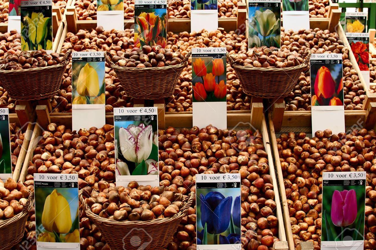 flower-market-tulip-bulbs-in-Amsterdam.jpg