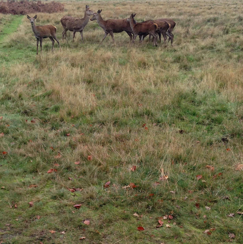 richmond park deer hello getaway city guide london