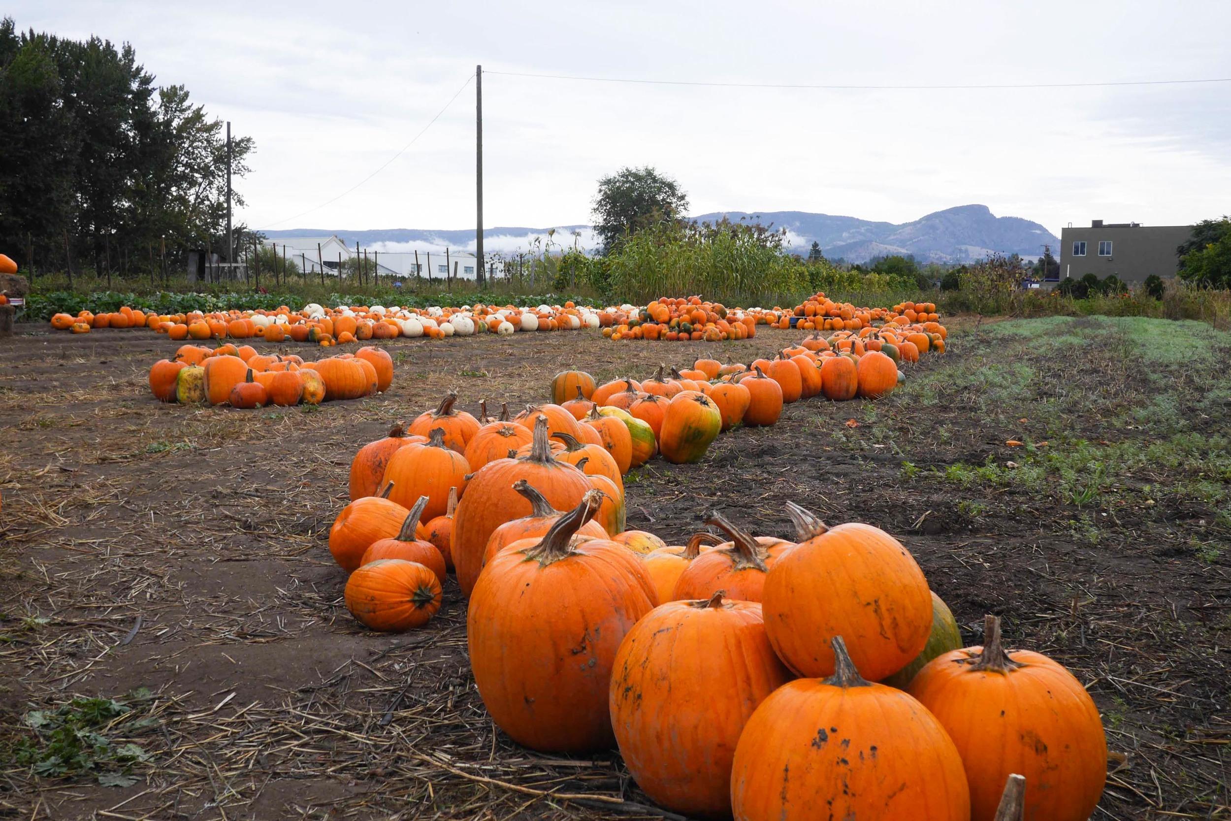 autumn okanagan valley weekend