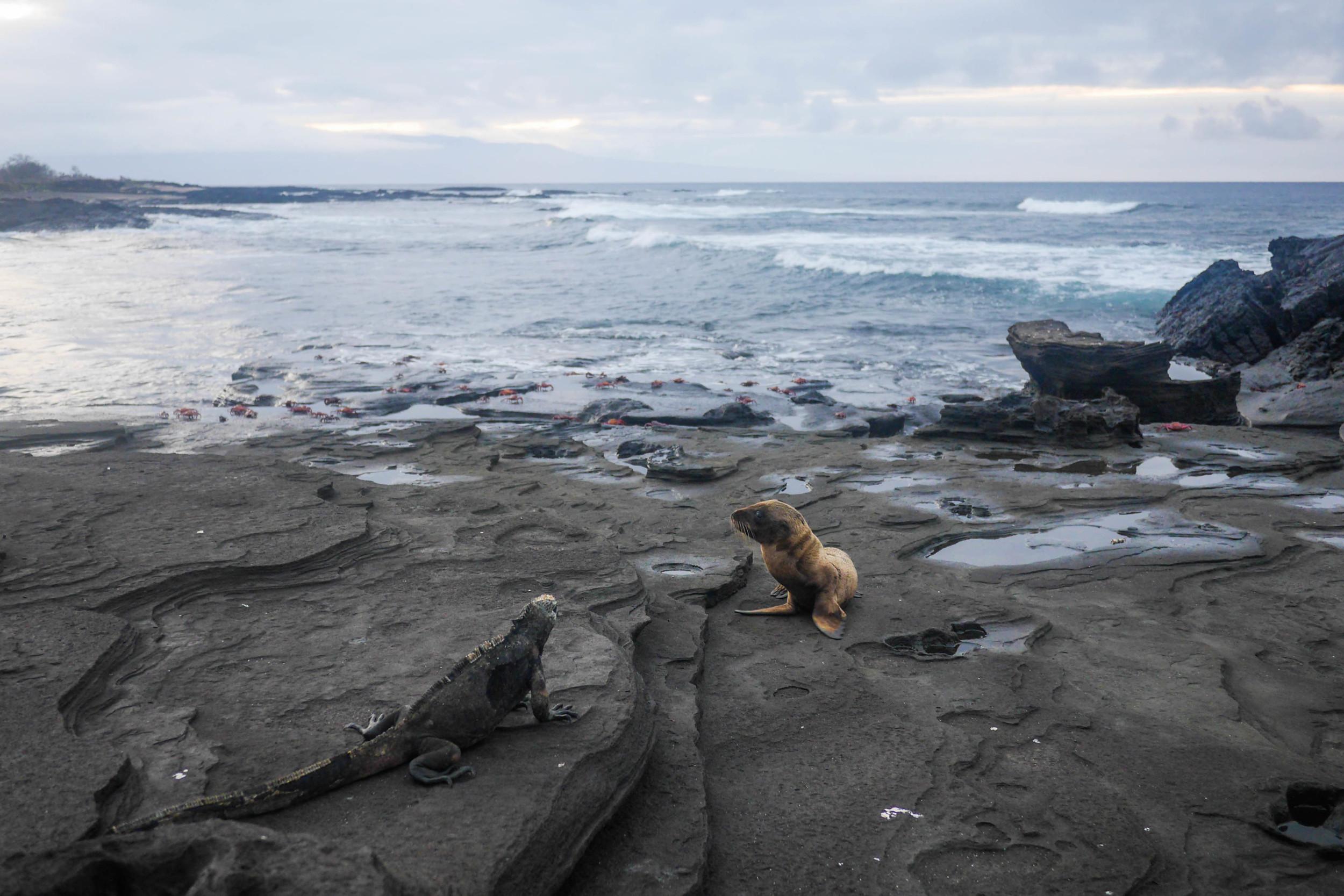 galapagos cruise ecuador iguana sealion hello getaway
