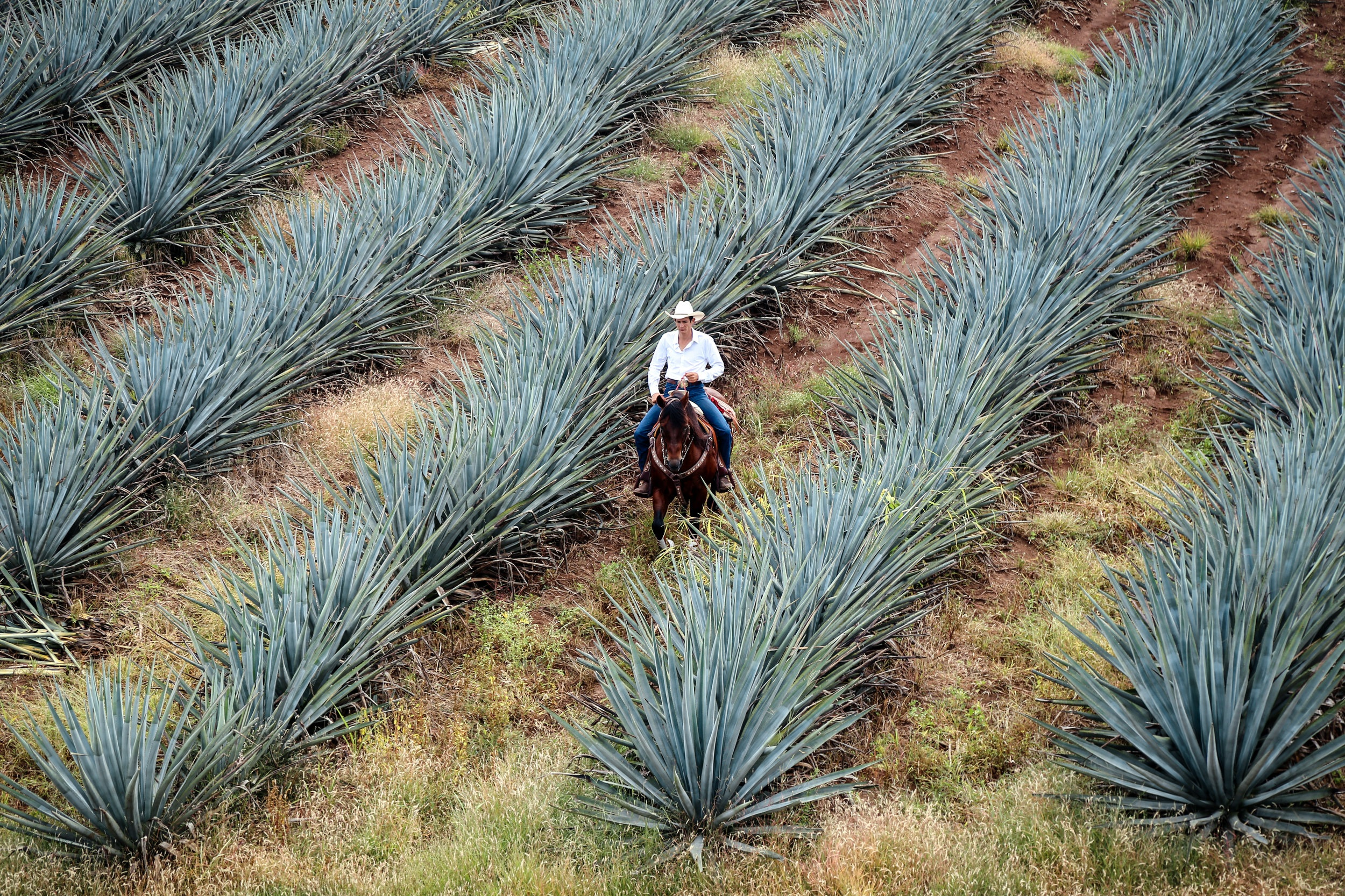 TEQUILA & MEZCAL TASTING - explore the differences between tequilas & mezcalstarting at $35 per person