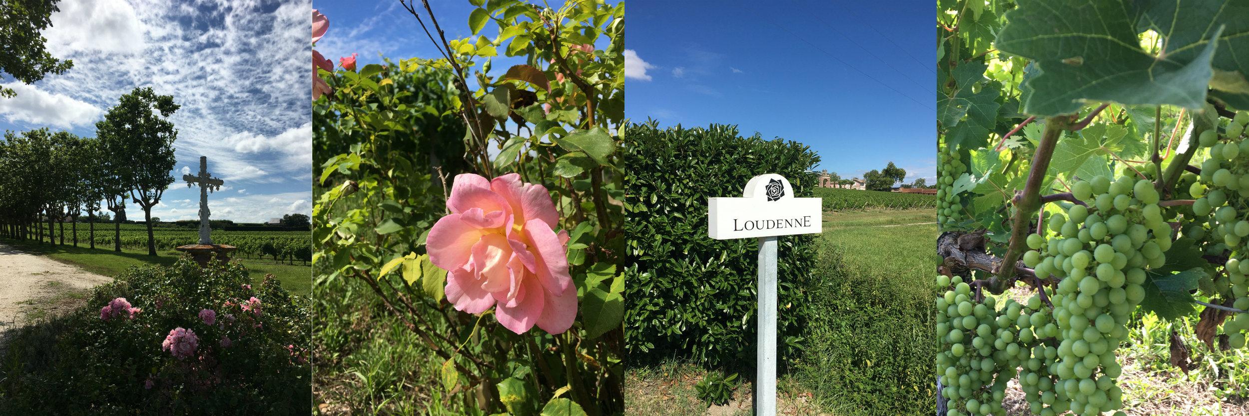 Medoc, France, Wine Vineyard, chateau loudenne