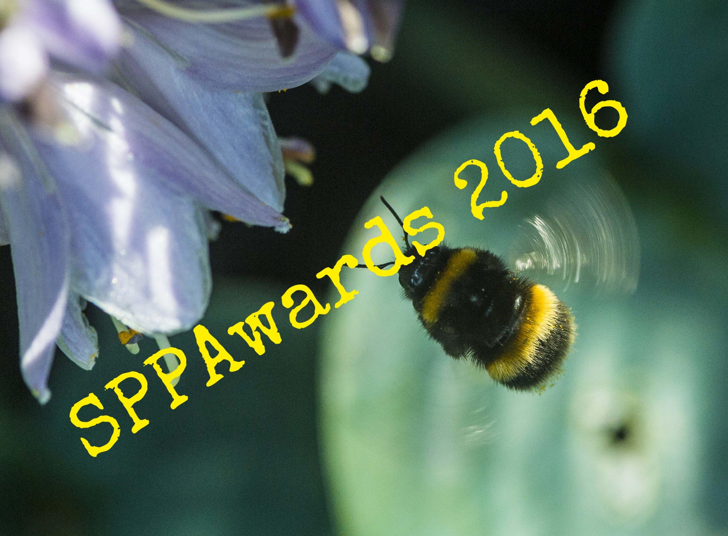 Bees numbers in global decline.jpg
