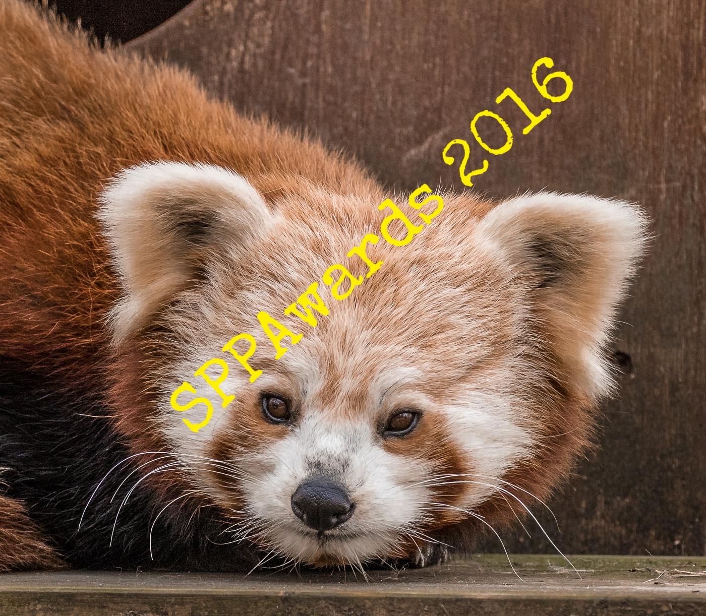 Nature & Environment - Red Panda.jpg
