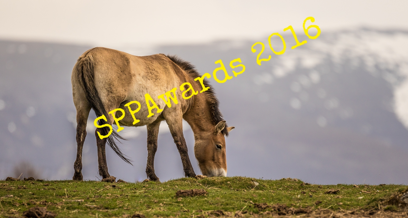 Nature & Environment - Przewalski's Wild Horse.jpg