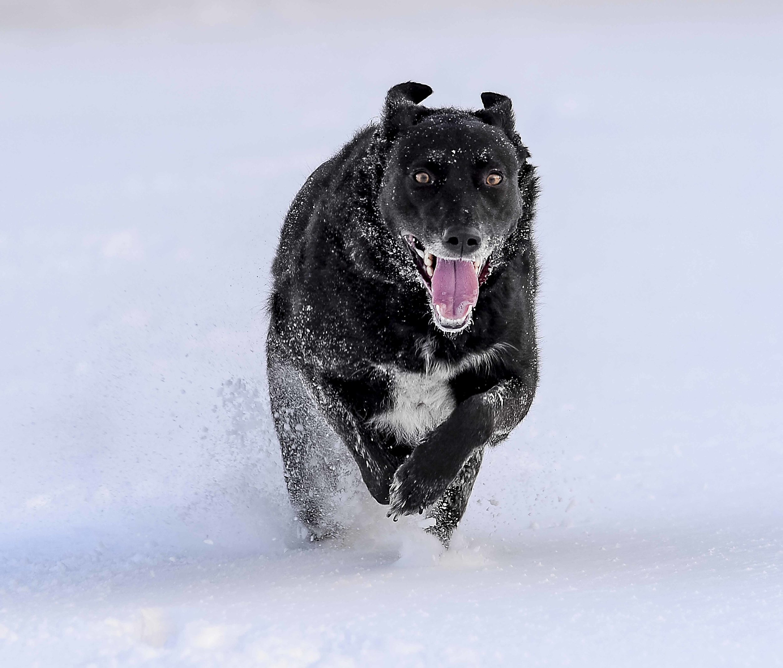 Snow fun with Beast from the East E.jpg