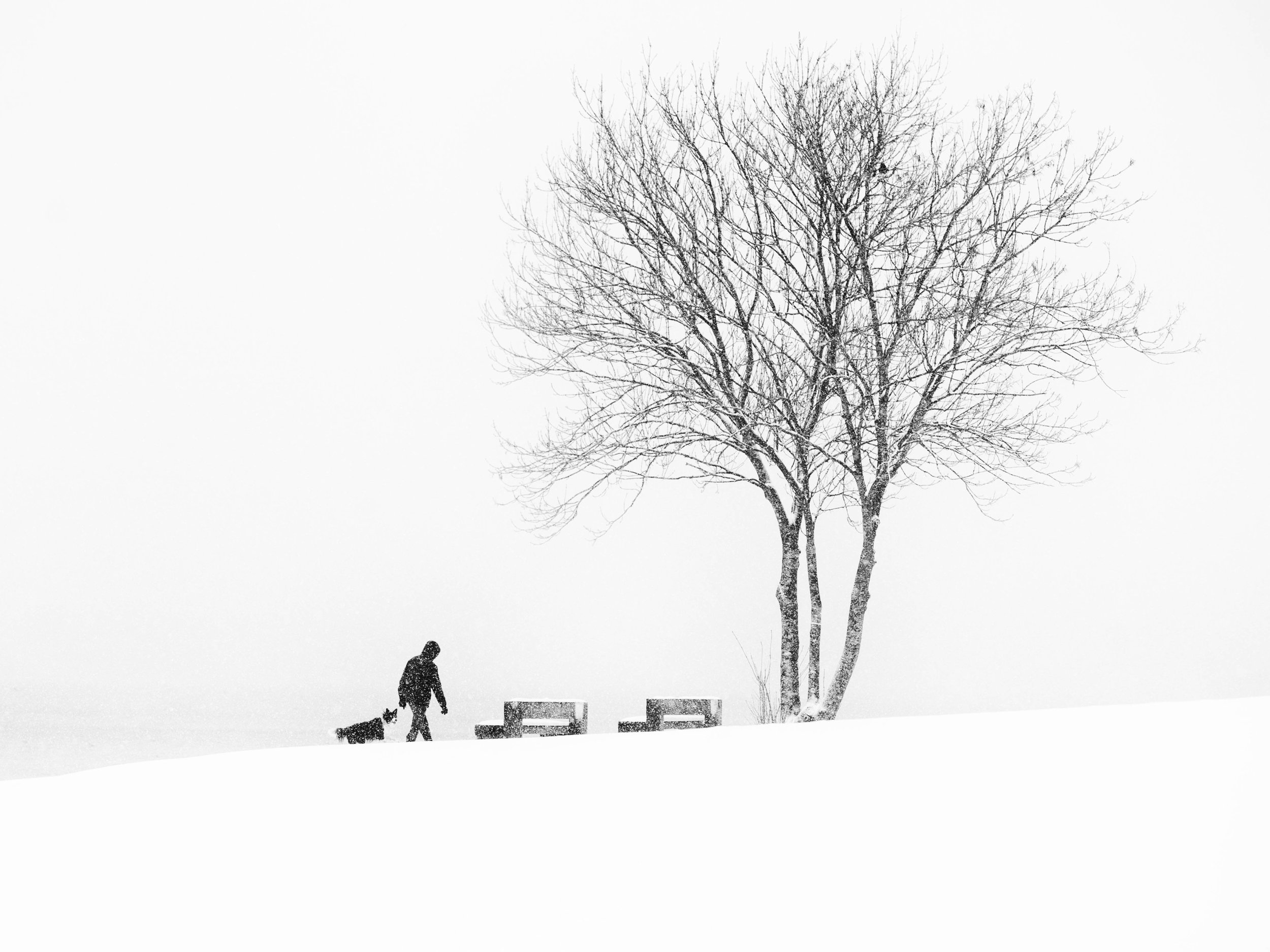 One-Man-and-his-Dog_Nature-and-Environment_1.jpg