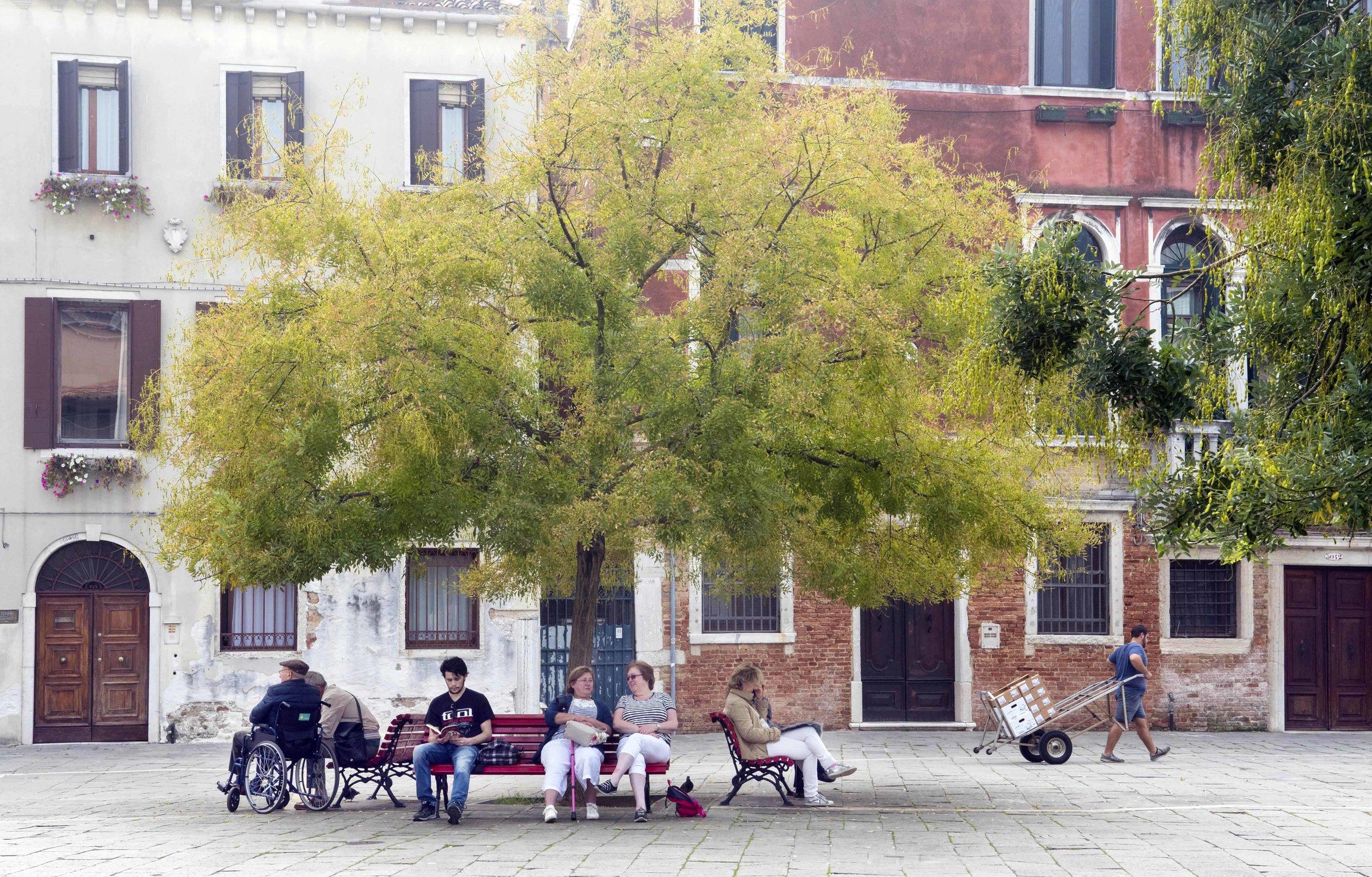 Tree Shade - Daily Life and  People.jpg