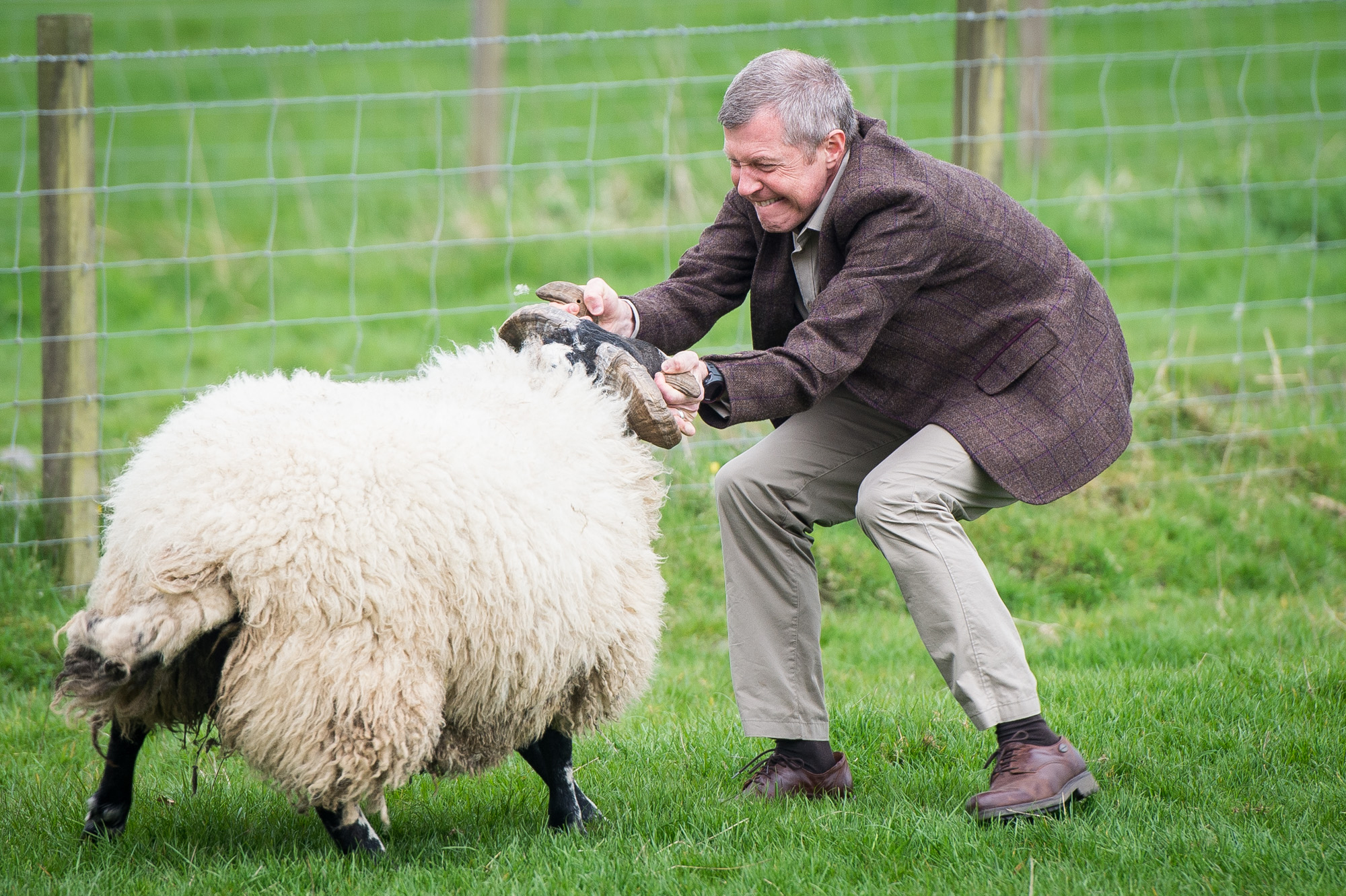 You can lead a ram to the ewes but….