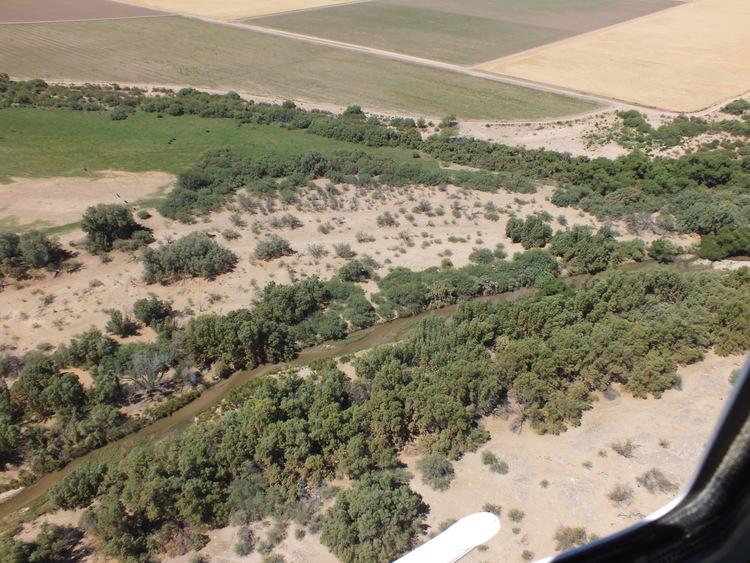 Healthy riparian habitat along the Santa Cruz river