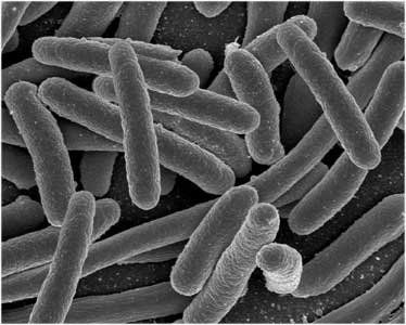 Close up of total coliform bacteria